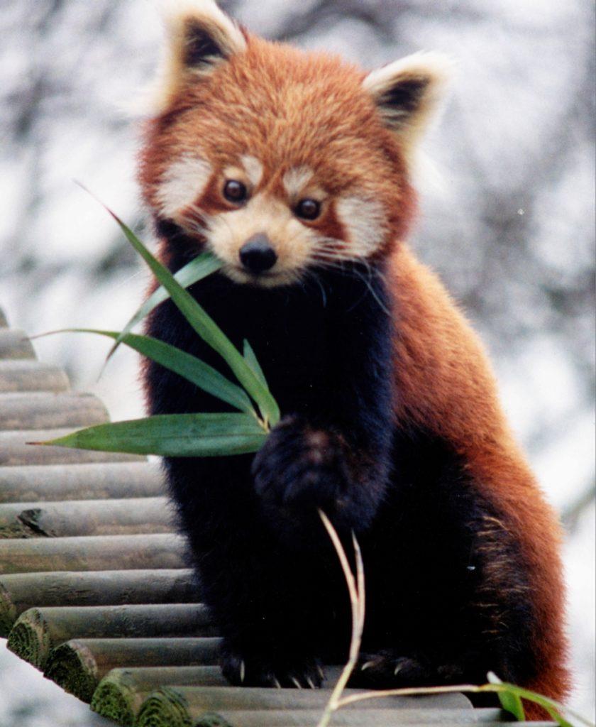 Самые милые дикие животные, которых я видел