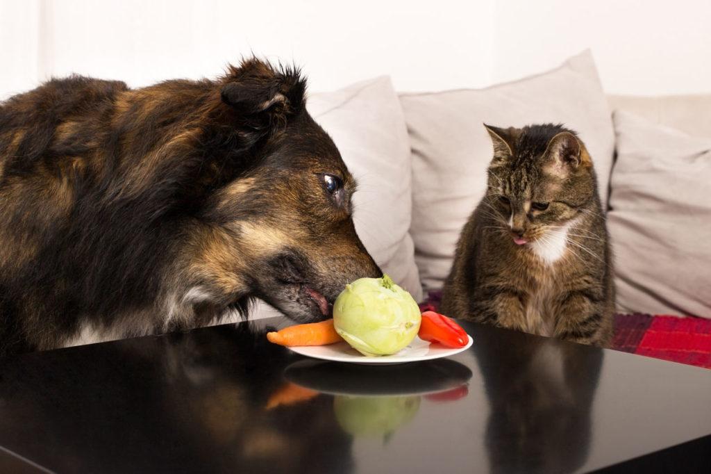 Чем кормить кошек и собак