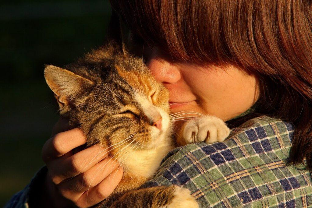 Минное поле: как наладить контакт с котенком