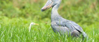 Клювы птиц: виды, формы, фото, назначение, причины