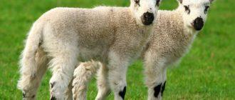 Клонирование животных: эксперименты, история, результаты
