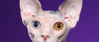 Характер кошек: породы, различия, поведение, причины, уход