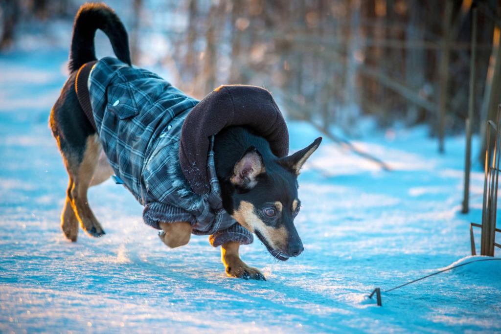 Чем могут заболеть собаки зимой