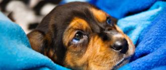 Болезни собак зимой: названия, симптомы, причины, лечение