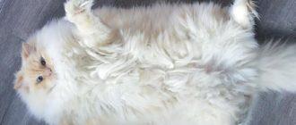 Пушистые кошки: тест, фото, опрос, вопросы, ответы