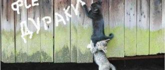 Собачники и кошатники: кого больше, психология, различия