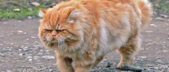 Сколько лет кошке: как считать, в чем разница, особенности