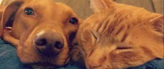 Кошки с собаками: фото, отношения, причины, особенности