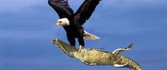 Опасные птицы: фото, виды, причины, последствия, что делать
