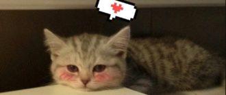 Милые кошки: породы, фото, внешний вид, особенности, уход