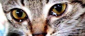 Как пережить смерть кота: причины, эмоции, психология, советы