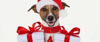 Животные подарки: мода, стиль, тренды, кого дарить, новый год