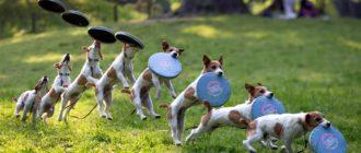 Игры с собакой: как развлечь, способы, причины, польза