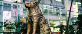 Верные собаки: имена, породы, история, случаи