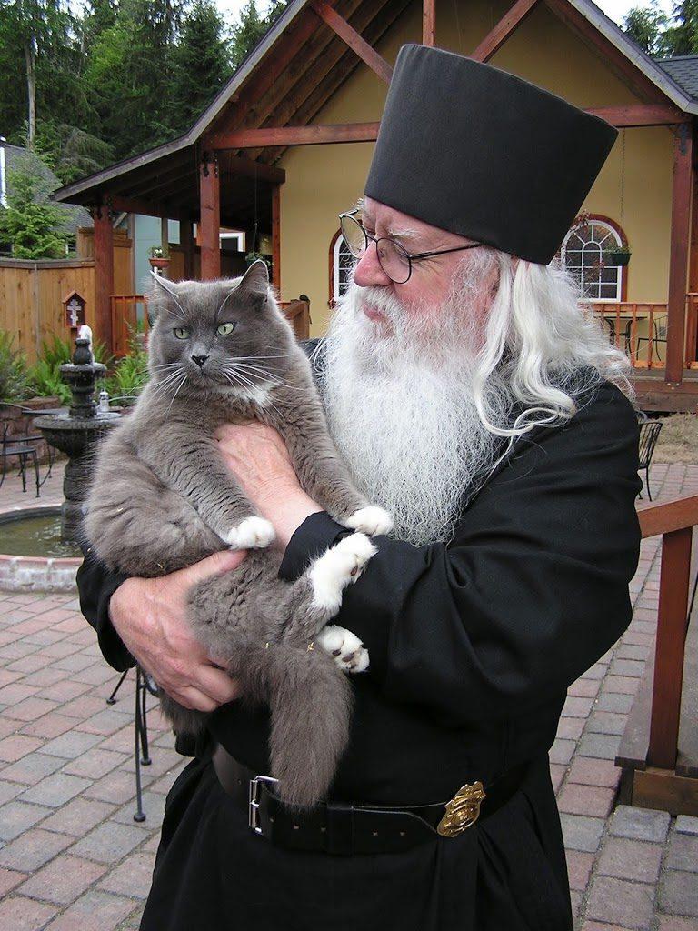 Есть ли у кошек душа: мнение мировых религий и красивые мифы