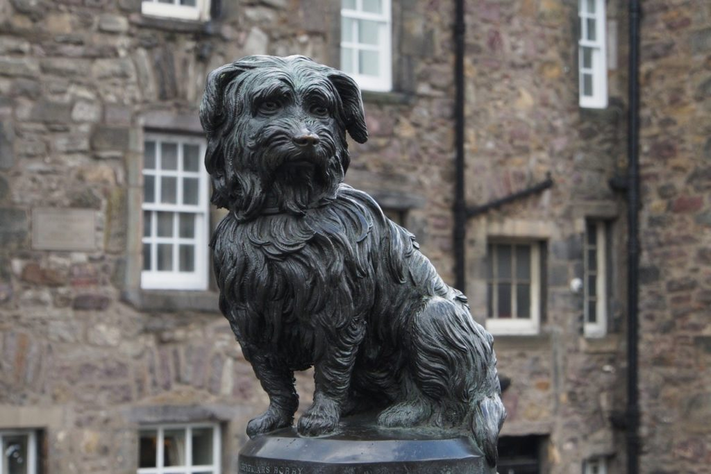 Топ 10 самых верных собак в мире - реальные истории