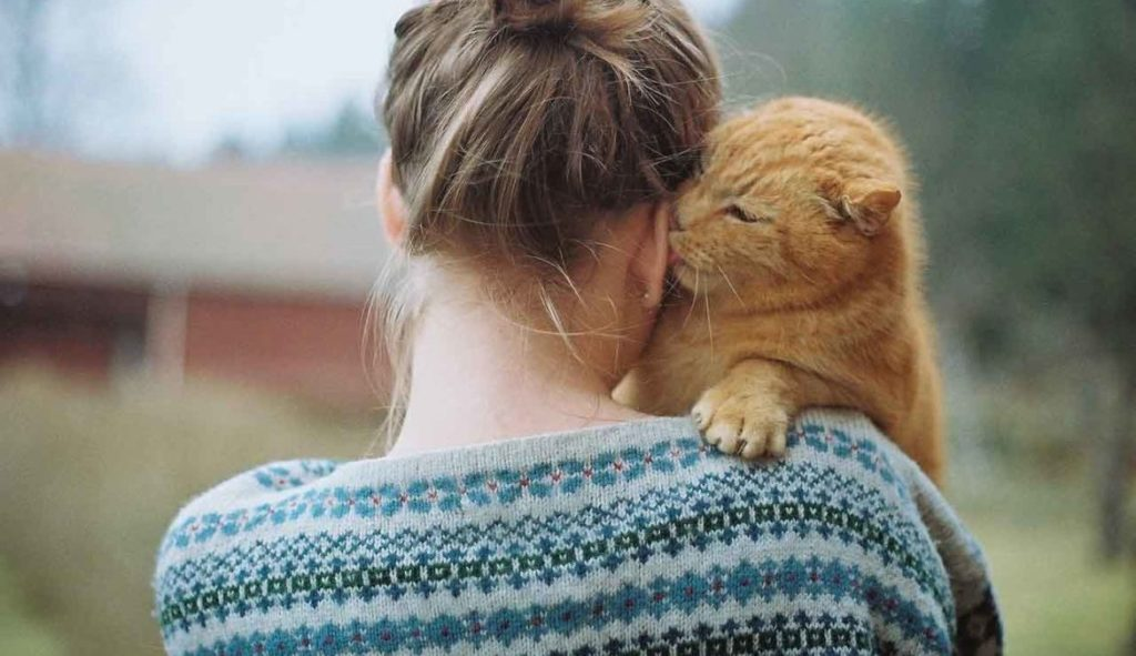 Почему все так сильно любят кошек