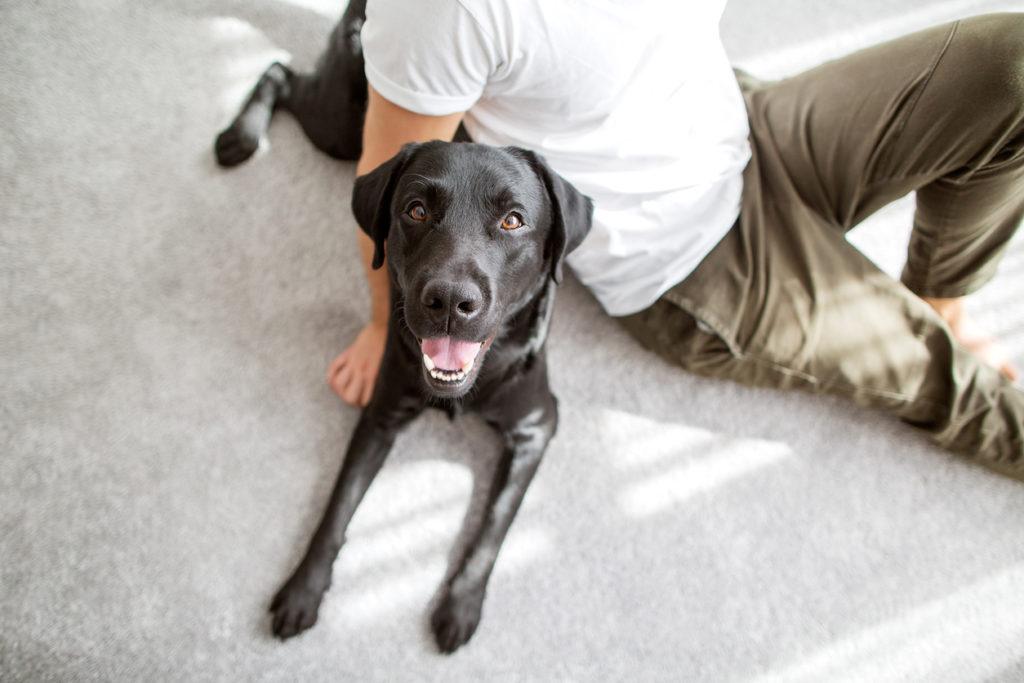 Как и зачем собака стала другом человека