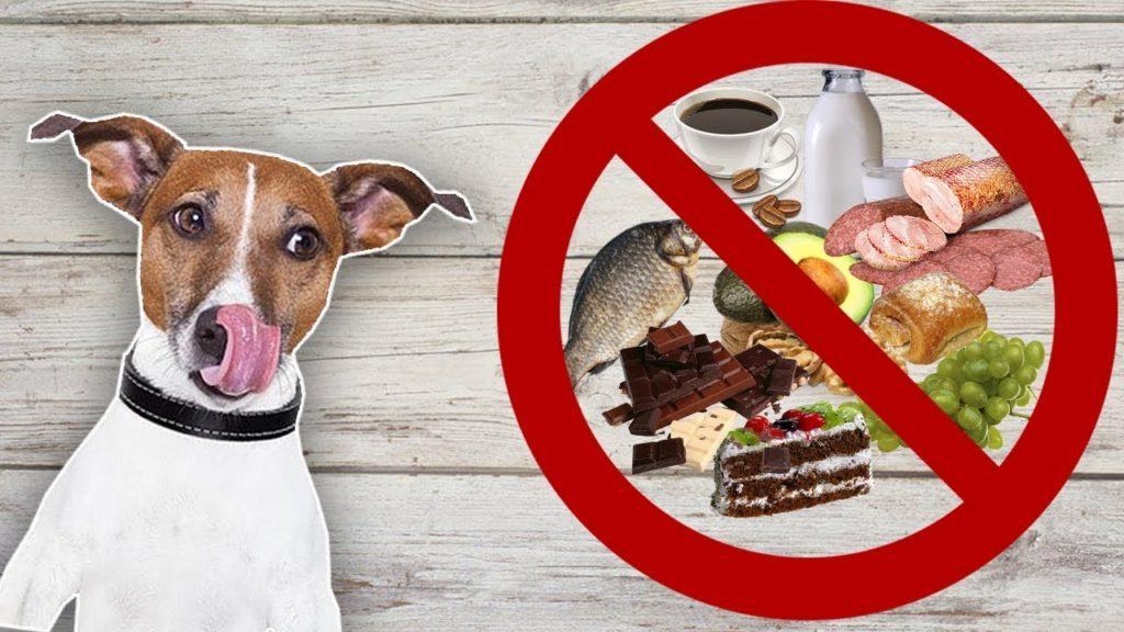 Почему нельзя кормить собаку со стола и чем это грозит
