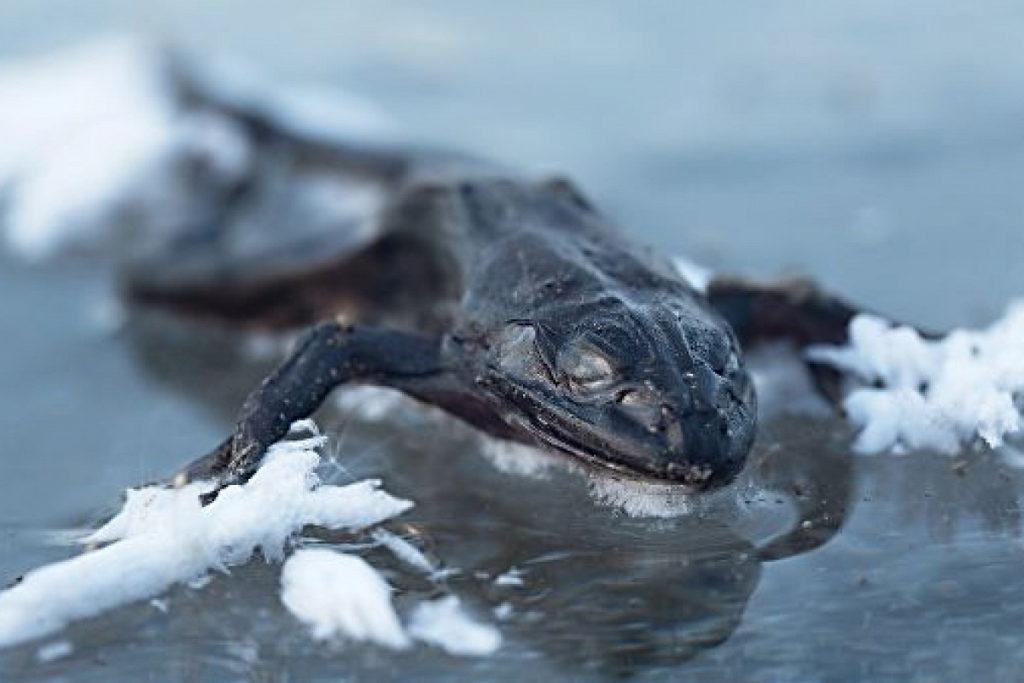 Крутые примеры адаптации животных к внешней среде