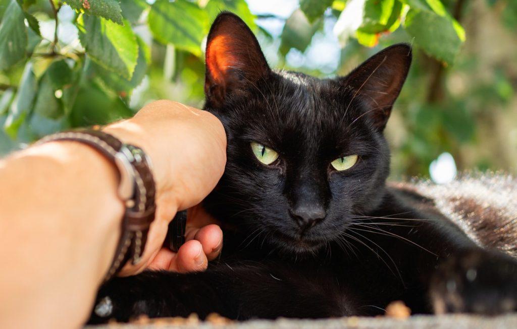 Готовы ли вы стать гордым обладателем кота