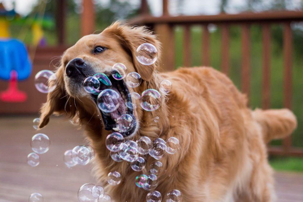 Как и во что поиграть с собакой - топ-5 идей