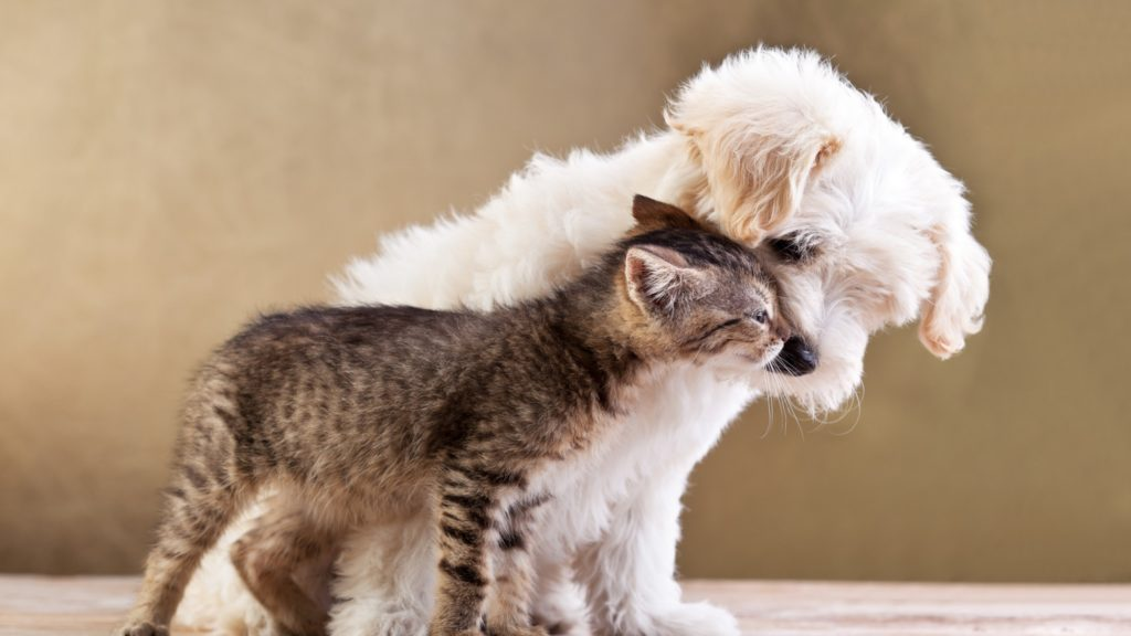 Кого в мире больше и чем отличаются кошатники от собачников
