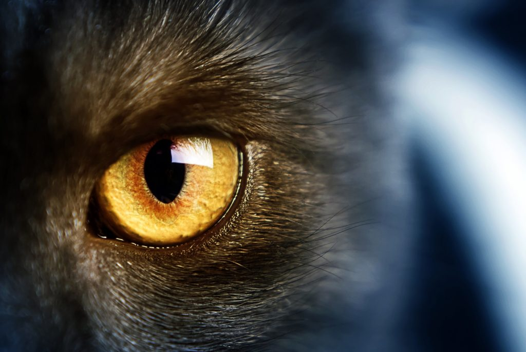Как видят кошки и различают ли они цвета