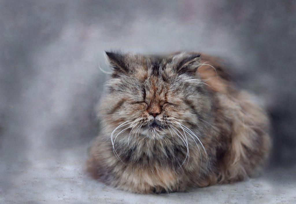 Сколько лет кошке по человеческим меркам: Три способа подсчета