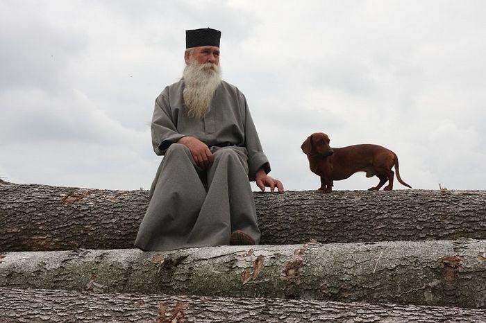 Почему не следует называть собак человеческими именами: причины