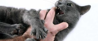 Любовь кошки: отношения, причины, характер, особенности