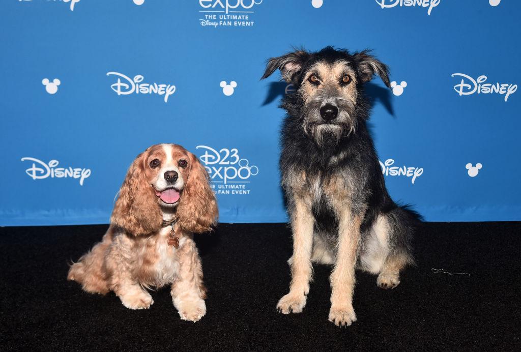 Заслуживают Оскара: 9 голливудских животных-кинозвезд