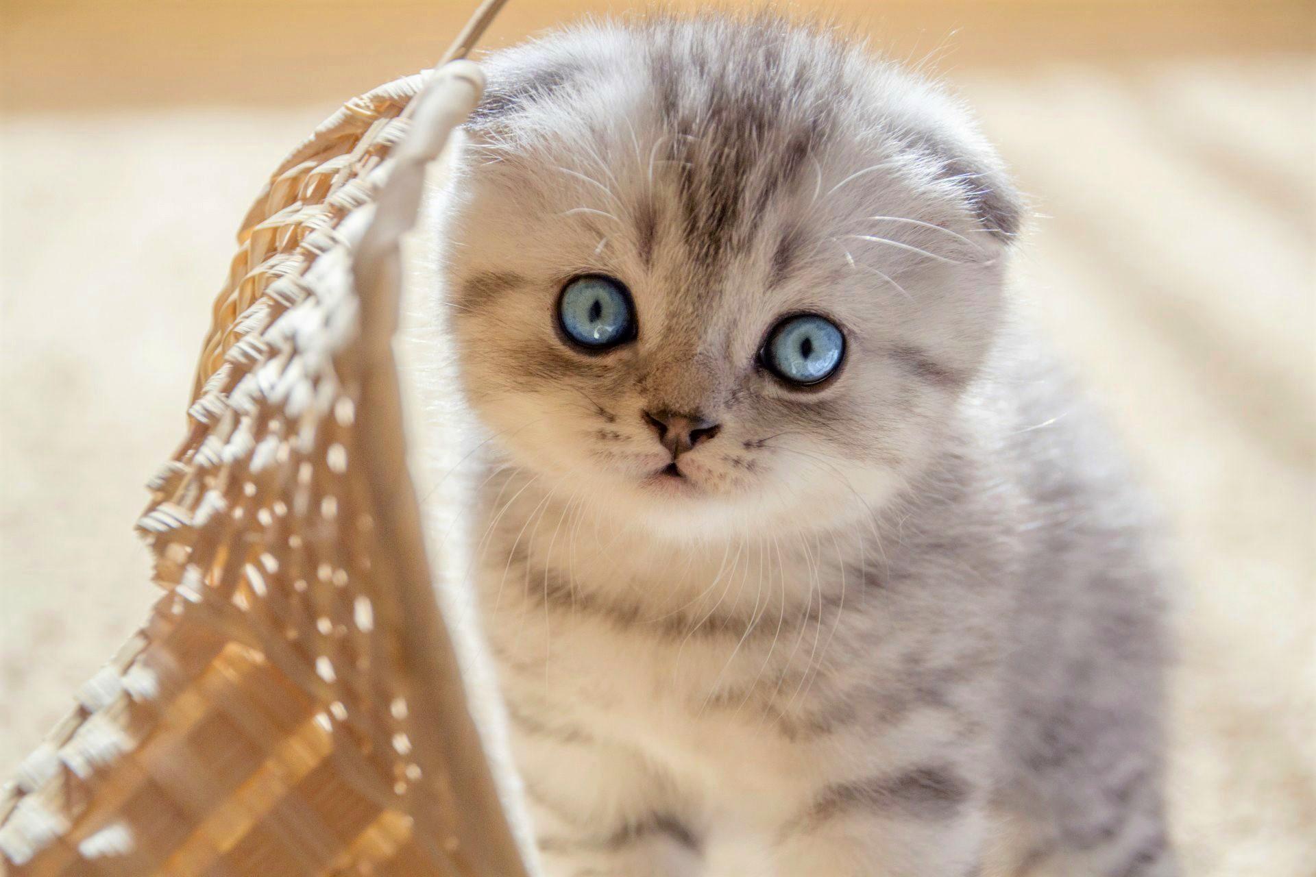 картинка самого милого котика формы