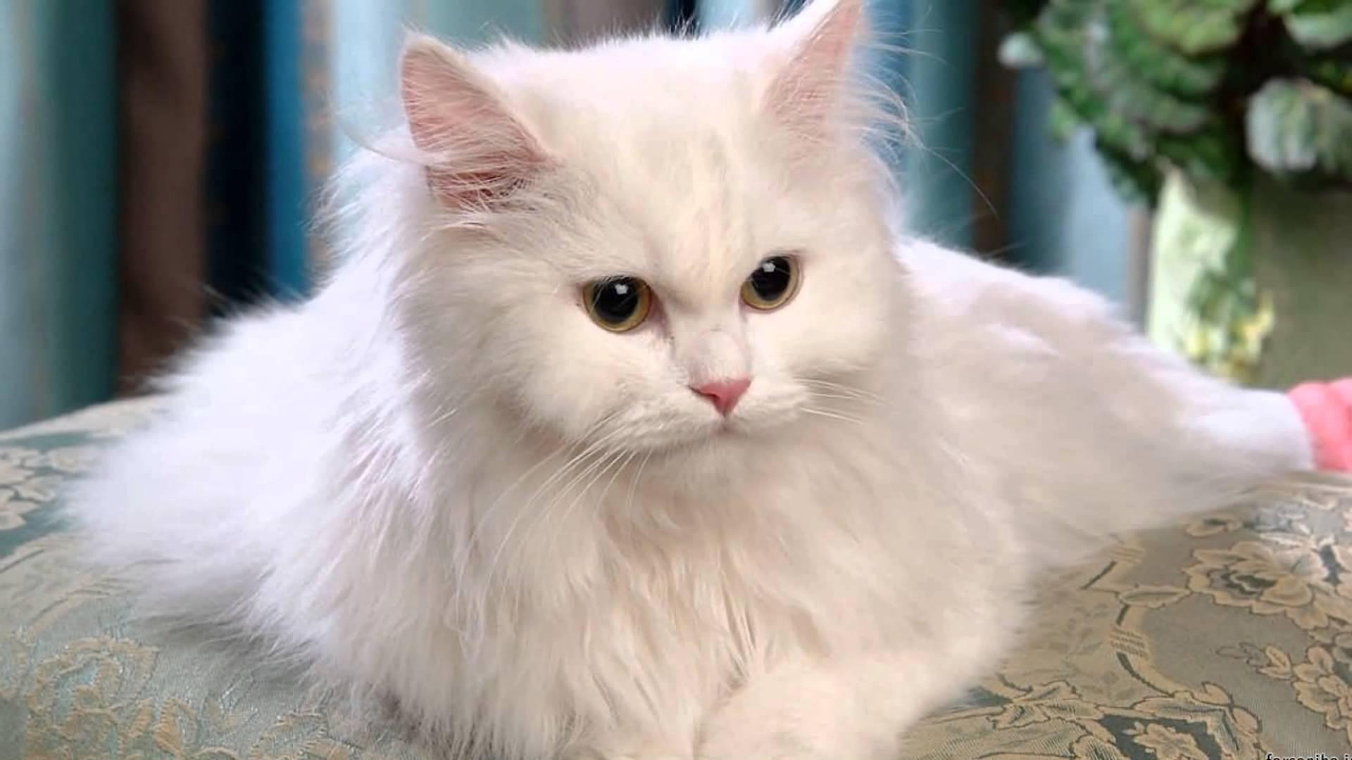 Фото самые белые пушистые котята