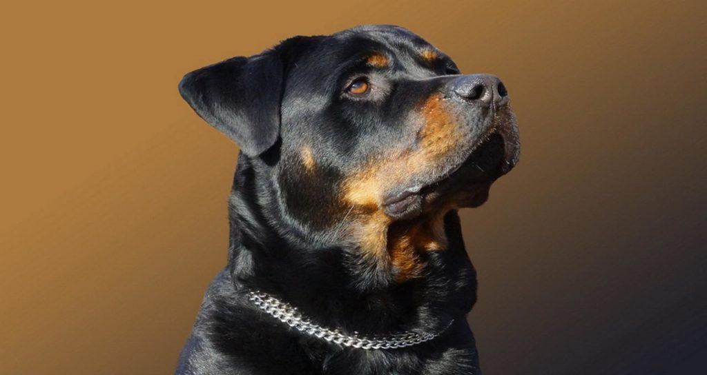 Топ 5 лучших пород собак для разведения и продажи