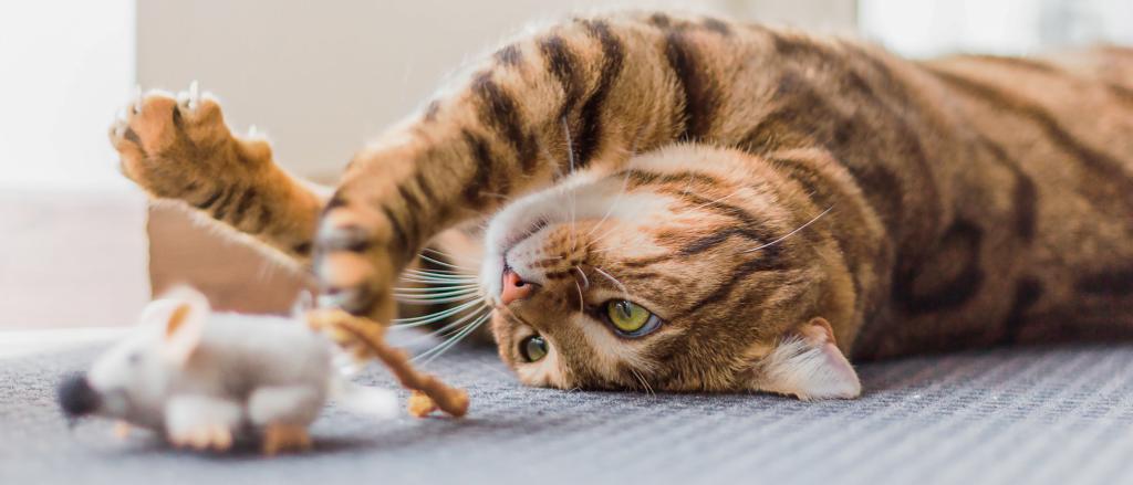 В чем разница между котами и кошками