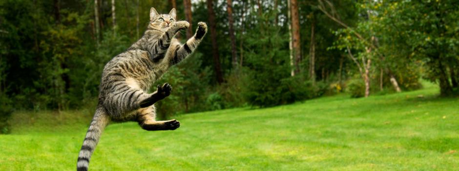 Почему кошки всегда приземляются на лапы и другие супер-способности кошачьих