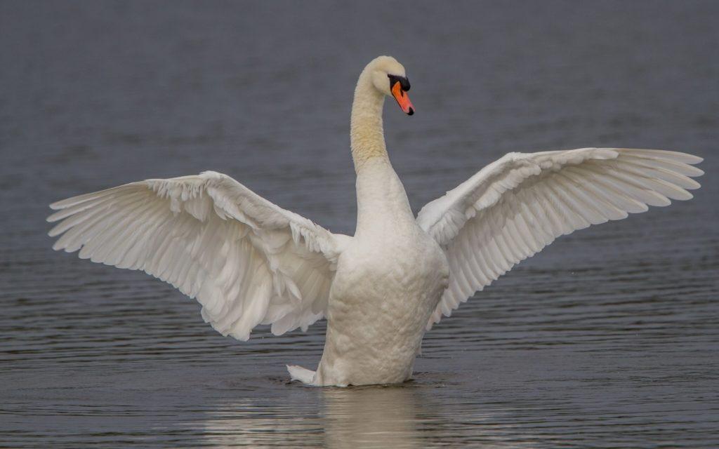Топ 7 Самые опасные птицы в мире