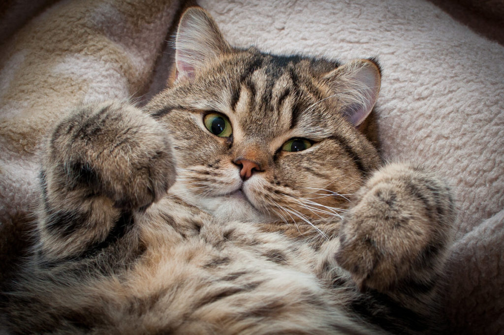 Сколько лет живут кошки: средняя продолжительность и как продлить