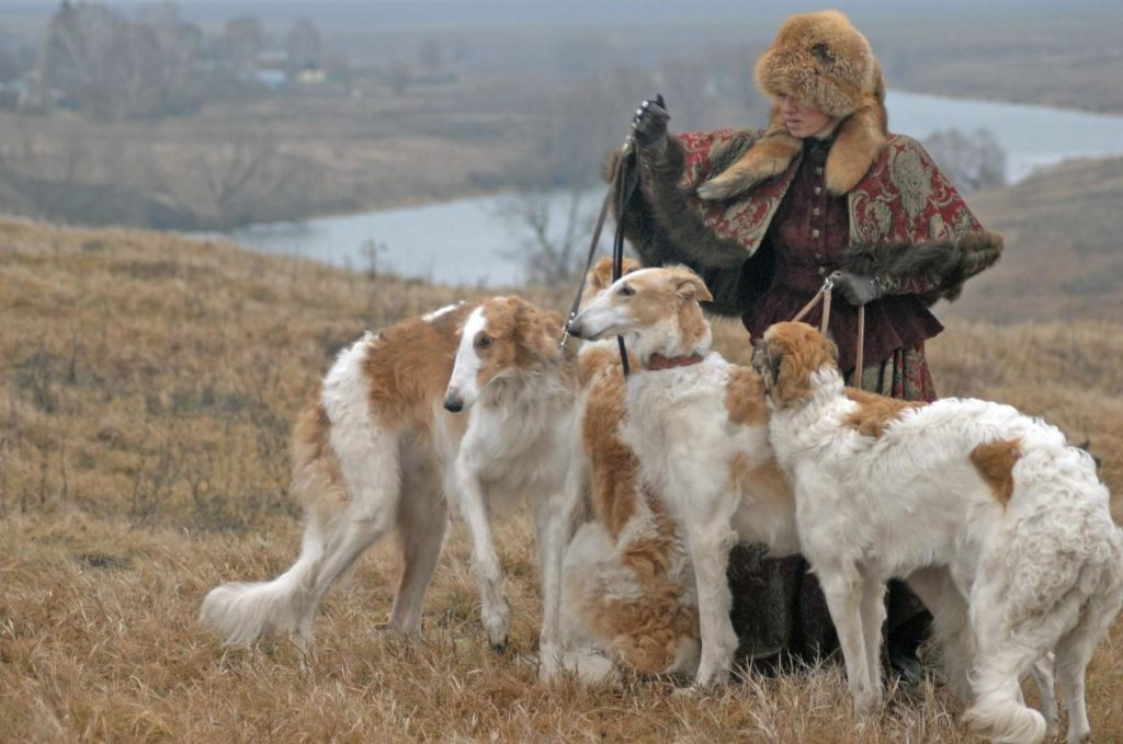 Кто круче: волк или собака