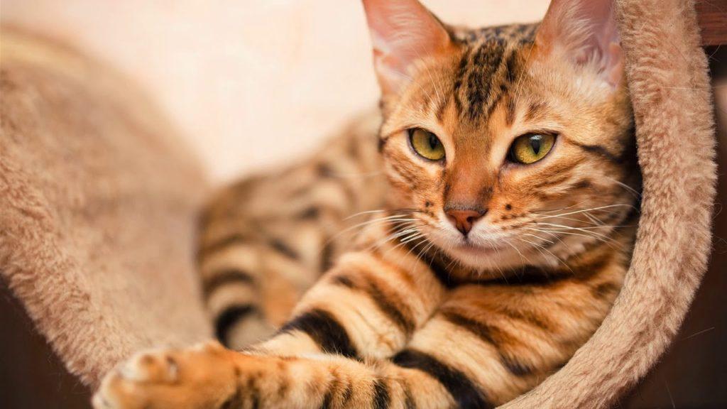 Как пережить смерть любимого кота и не сойти с ума
