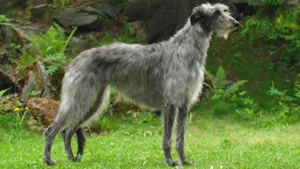 Самая быстрая собака в мире - кому принадлежит рекорд Гинесса