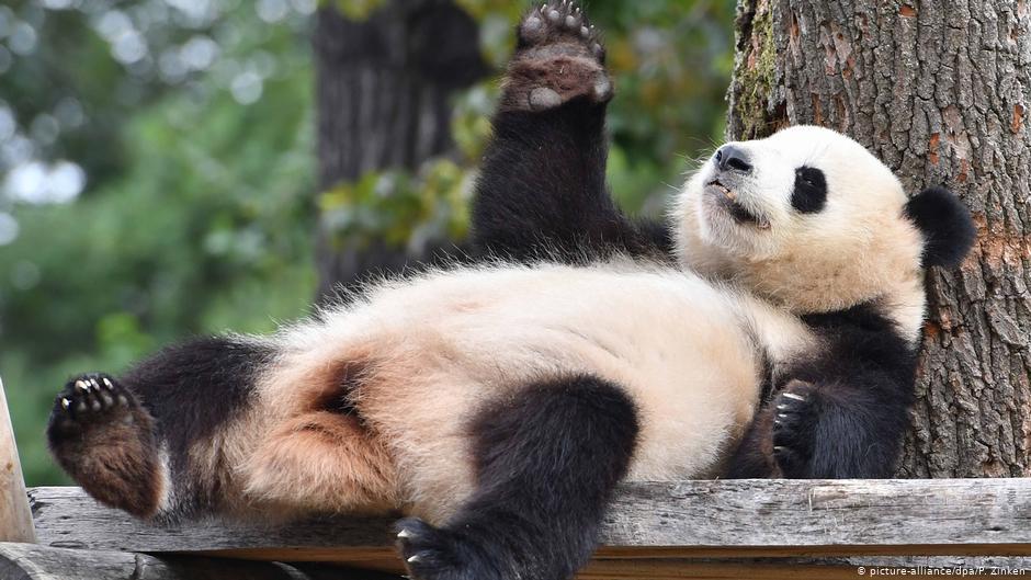 Топ 10 самых глупых животных в мире