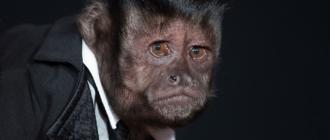 Животные кинозвезды: фото, фильмы, роли, особенности