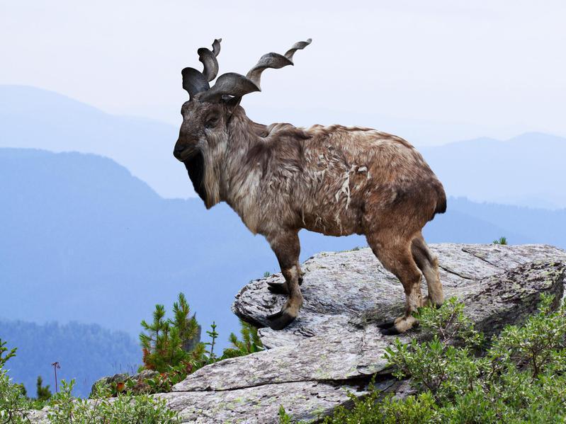 Топ 10 необычных животных, которых отфотошопила сама природа