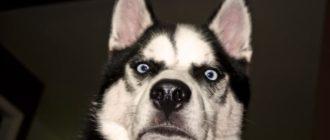 Непослушные собаки: названия, породы, фото, характер, причины