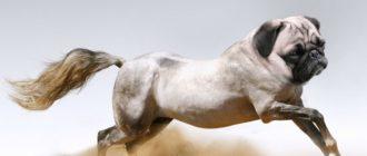 Животные гибриды: фото, названия, описание, история