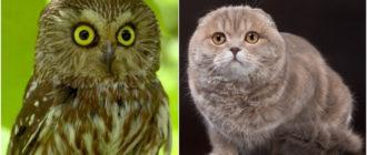 Кошки похожие на других животных: породы, фото, сходство