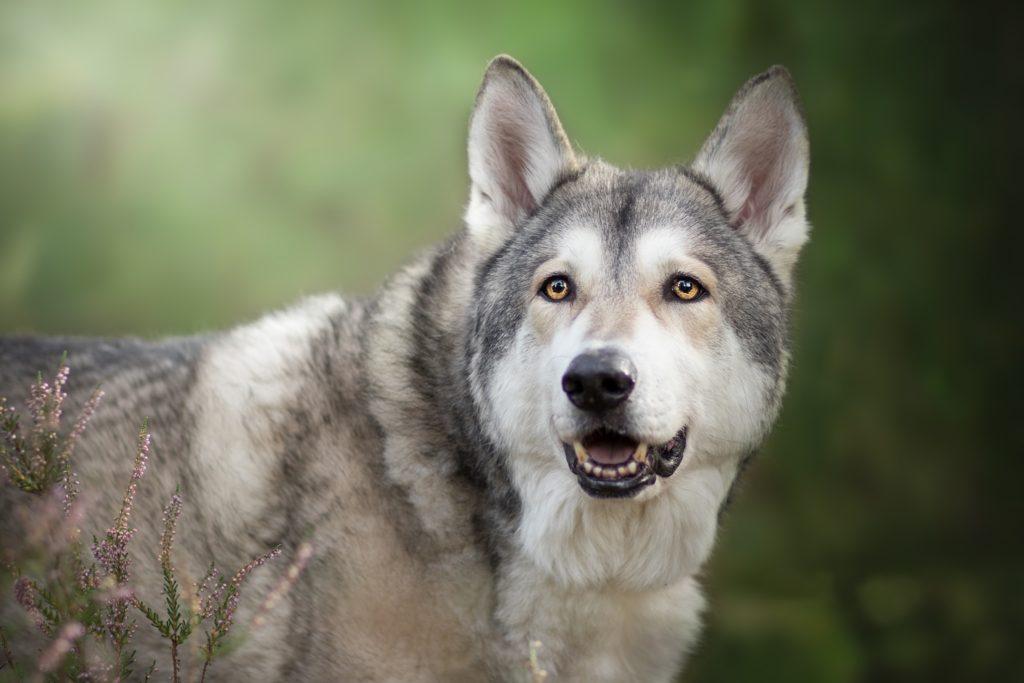 Топ 10 пород собак, которых мы не зря боимся