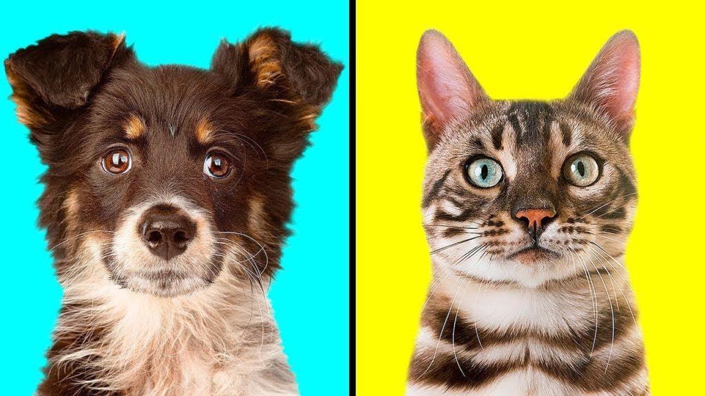Моська: Собака с детства живёт с кошками и сама считает себя котейкой